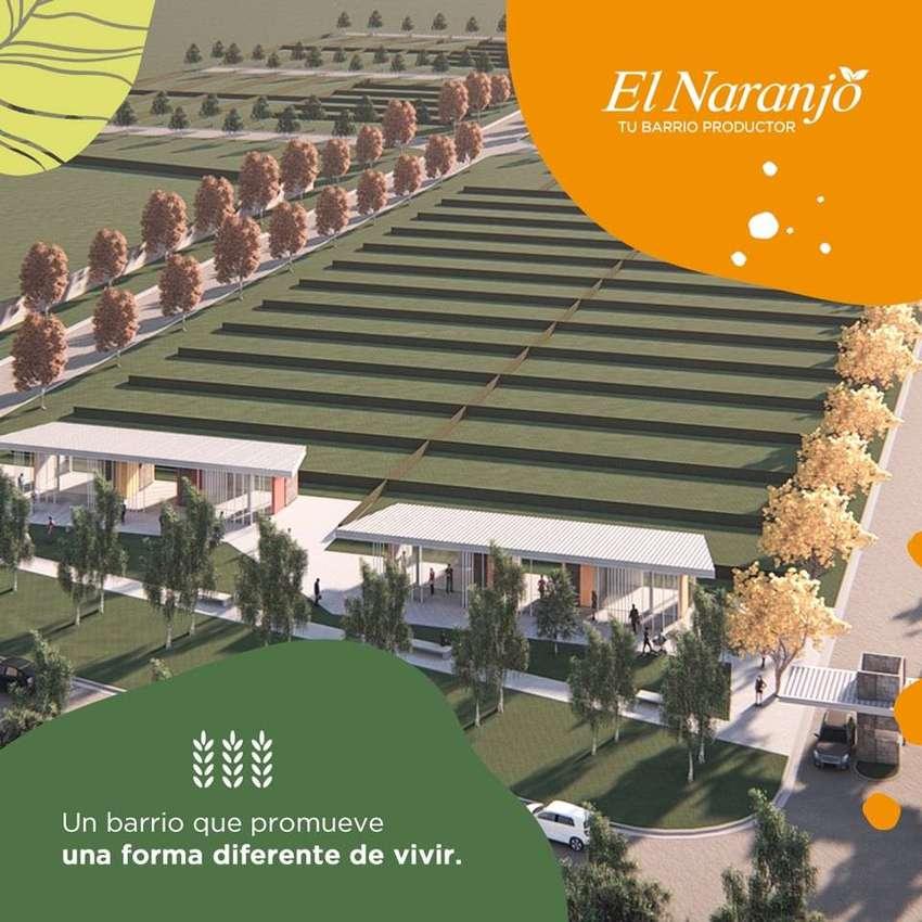 El Naranjo, tu barrio productor. 0