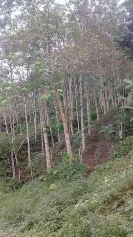 Se vende 6 hectareas de terreno