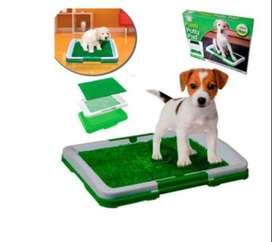 Tapete Entrenamiento Sanitario Para Mascotas Pequeño Puppy Potty Pad