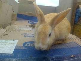 Oferta de Conejos