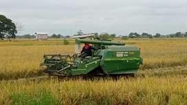 cosechadora de arroz