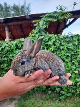 Vendo conejos para mascota