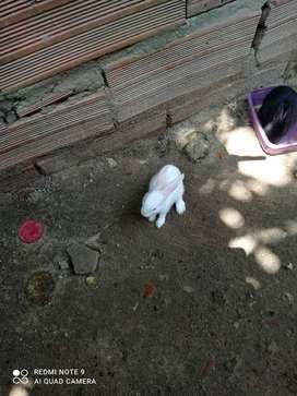 Vendo lindos conejos