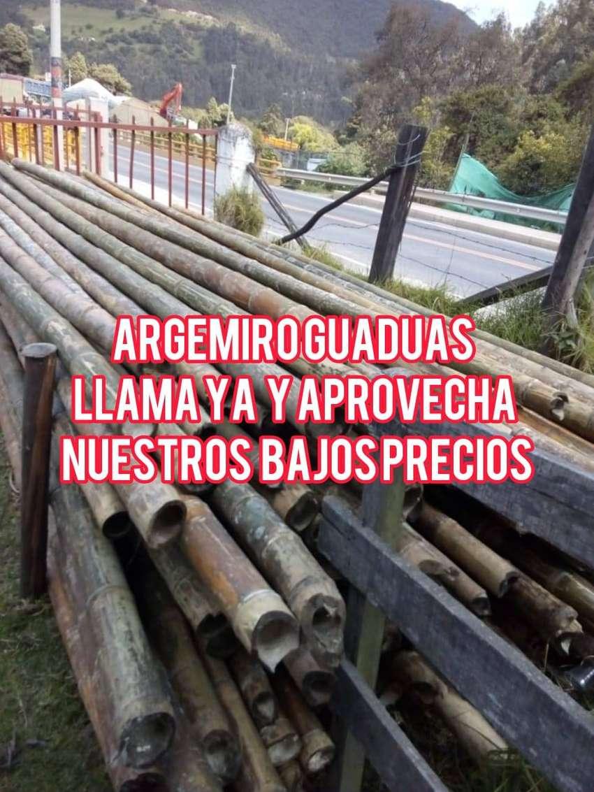 bambu argemiro 0