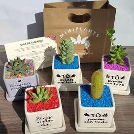 Suculentas Cactus en macetas decorativas frases motivadoras
