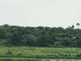 Venta Finca de 540 hectáreas con Palma Africana en Chamanga
