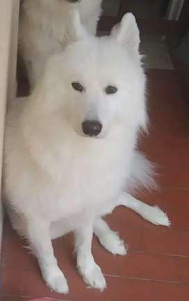 Perro para monte