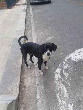 Perrito en adopción en Bucaramanga