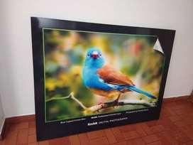 Cuadro en papel fotográfico - Full color - Ave Pájaro